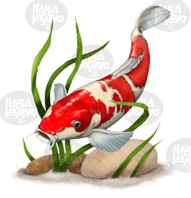 koi-fish